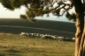 http://www.dreamstime.com/stock-photos-pecore-rimagefree1513004-resi3080501