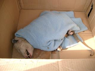 opossuminbox