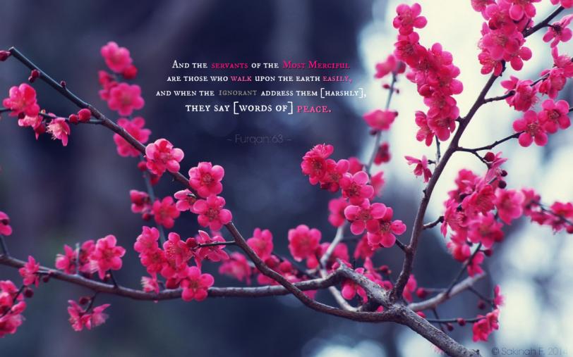 blossomfurqan